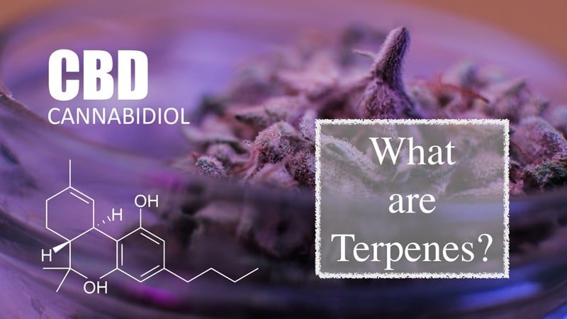 CBD Today & All New Terpenes